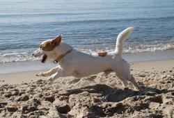 Traitement de la hernie discale chez le chien, jusqu'à 98% de résultats