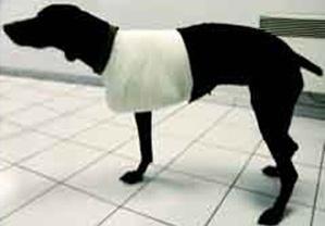 Traitement de l'instabilité de l'épaule chez le chien adulte