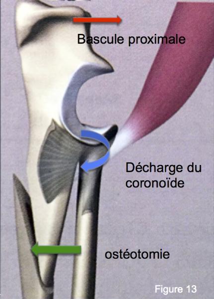 Orthopédie chien, Paris