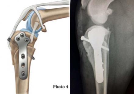 Traitement de la déchirure du  ligament croisé par  la CBLO a la vlinique ABVET