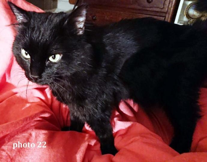 photo du chat des photos 19 à 21,  18 mois après l'intervention
