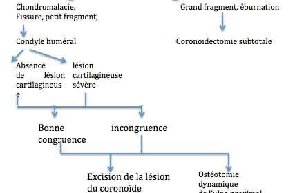 Le processus coronoïde revisité chez le chien syndrome du compartiment médial(2)