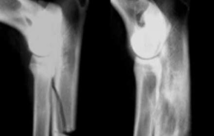 Quelques nouveautés du Congrès de la Société Européenne d'Orthopédie Vétérinaire (ESVOT)