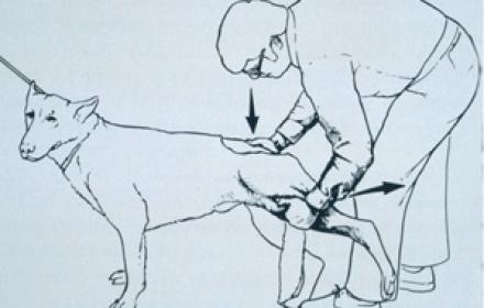 Le syndrome de la queue de cheval: une entité sous-diagnostiquée!